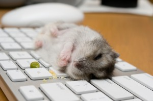 hamster eating on dirty keyboard